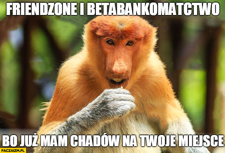 Friendzone i betabankomactwo bo już mam Chadów na Twoje miejsce typowa dziewczyna Polak nosacz małpa
