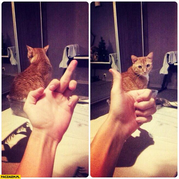 Fuck you ok trollowanie kota