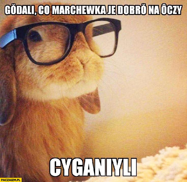 Gadali że marchewka jest dobra na oczy cyganili kłamali królik w okularach