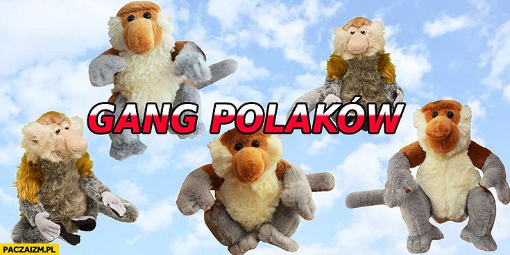 Gang Polaków pluszaki zabawki jak świeżaki typowy Polak małpa nosacz
