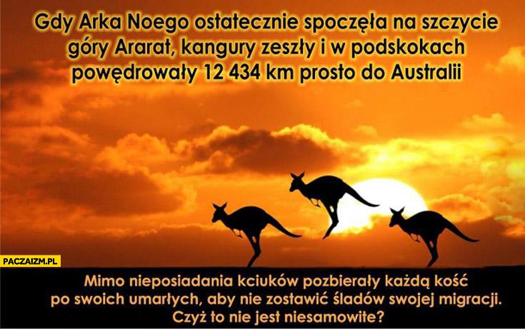 Gdy Arka Noego spoczęła na szczycie góry Ararat kangury powędrowały do Australii
