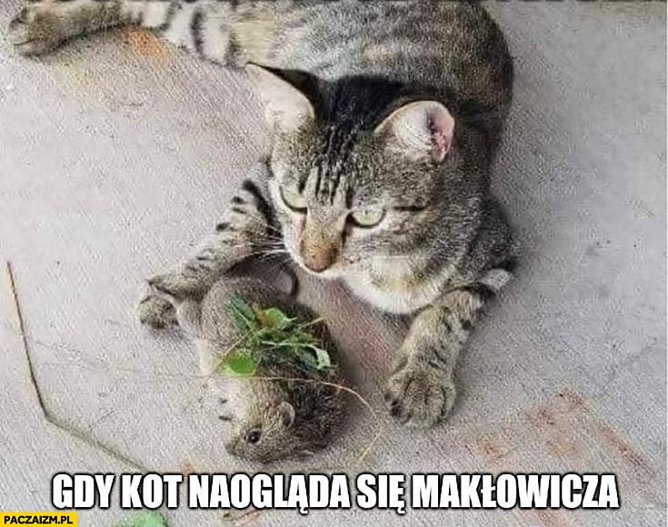 Gdy kot naogląda się Makłowicza potrawa mysz przyozdobiona