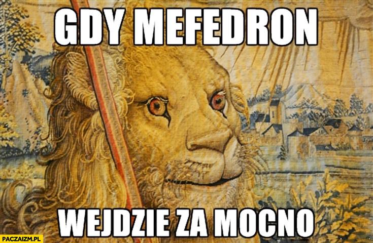 Gdy mefedron wejdzie za mocno lew