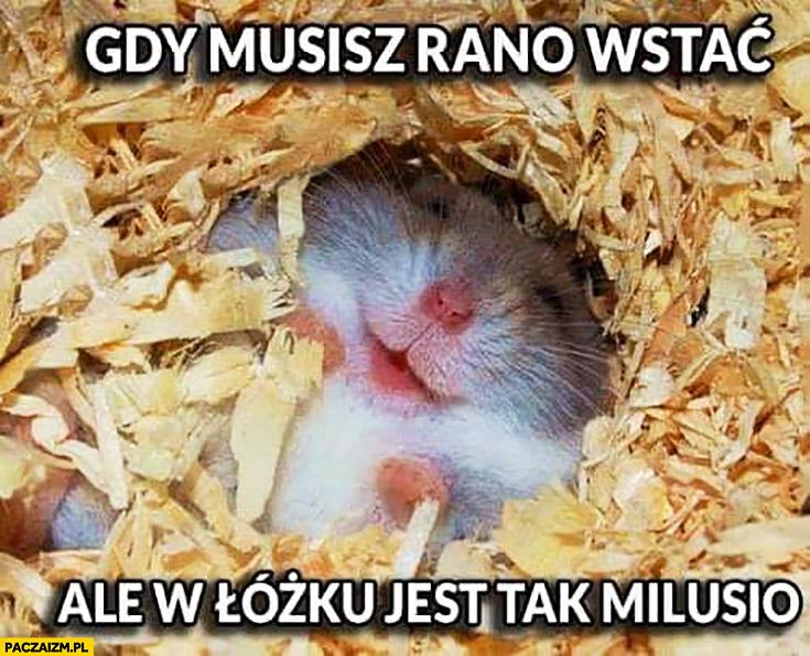 Gdy musisz rano wstać ale w łóżku jest tak milusio mysz myszka chomik