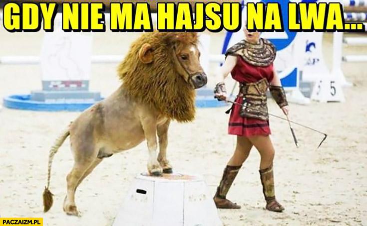 Gdy nie ma kasy hajsu na lwa. Koń przebrany za lwa w cyrku