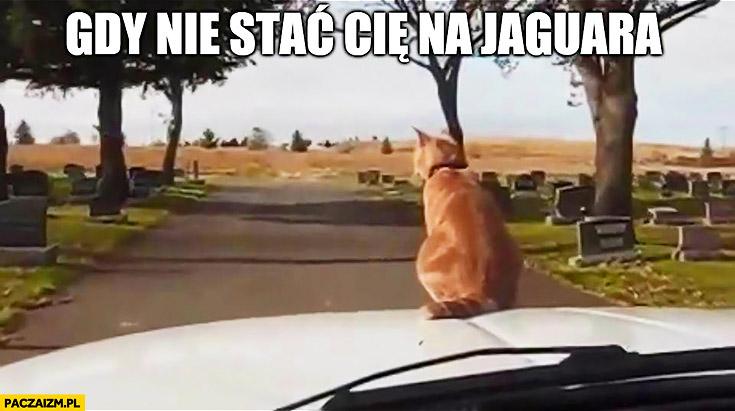 Gdy nie stać Cię na Jaguara kot na masce samochodu auta