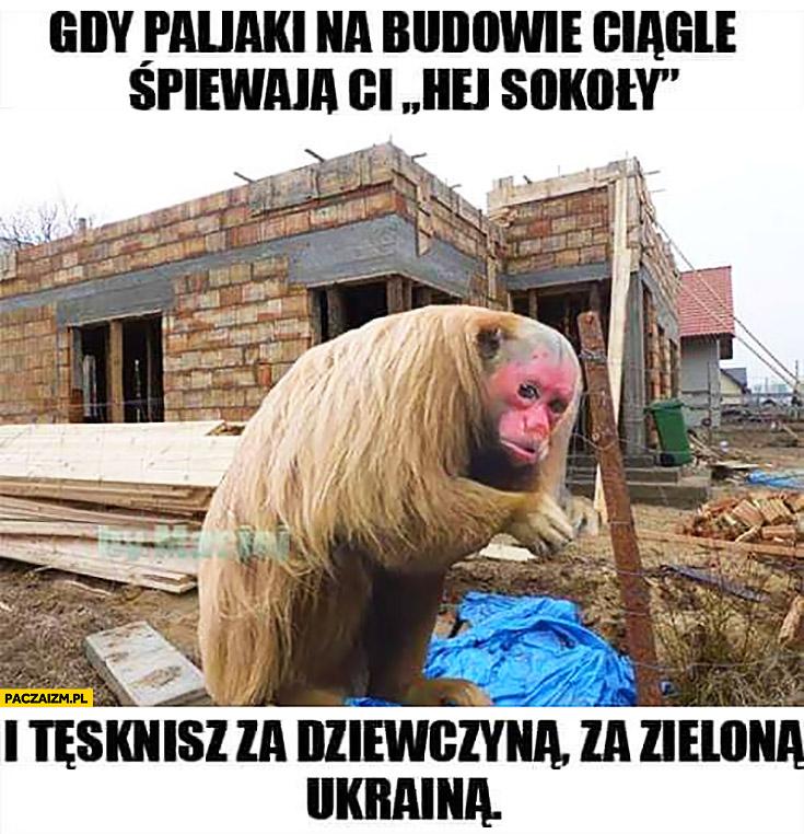 Gdy Polaki na budowie ciągle śpiewają Ci hej sokoły i tęsknisz za dziewczyną za zieloną Ukrainą małpa Ukrainiec