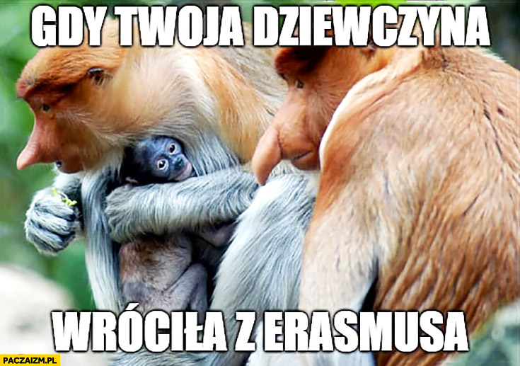 Gdy Twoja dziewczyna wróciła z Erasmusa typowy Polak nosacz małpa