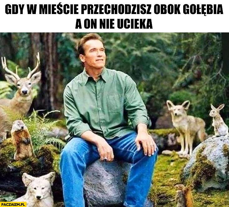 Gdy w mieście przechodzisz obok gołębia a on nie ucieka Schwarzenegger ze zwierzątkami