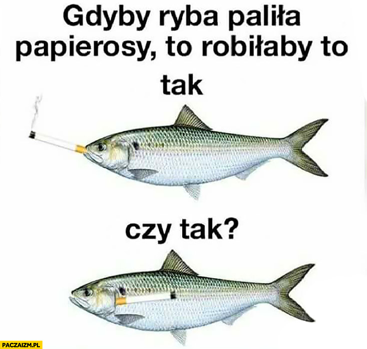 Gdyby ryba paliła papierosy to robiłaby to tak czy tak?
