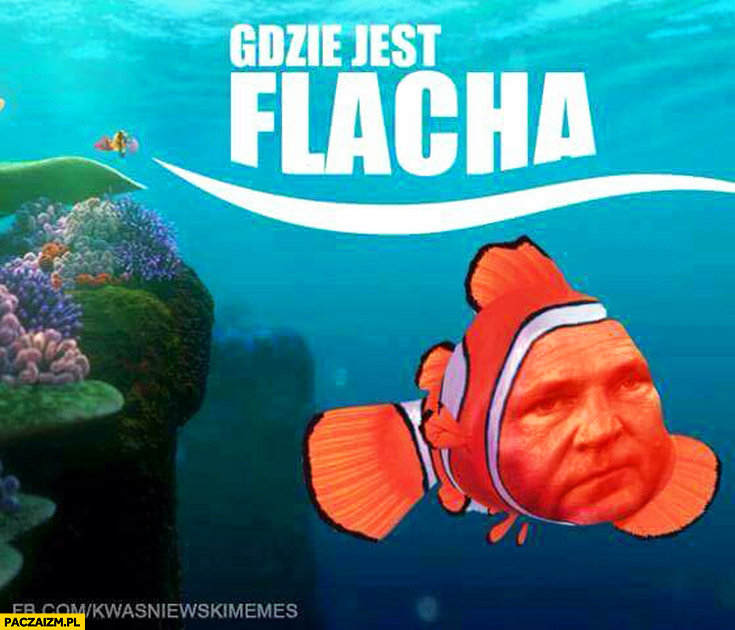 Gdzie jest flacha? Kwaśniewski Gdzie jest Nemo?