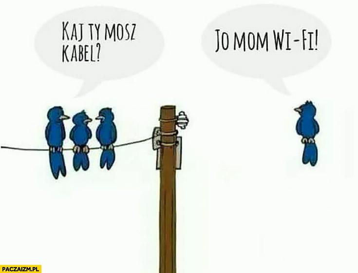 Gdzie Ty masz kabel? Ja jestem wifi. Ptaki na przewodach