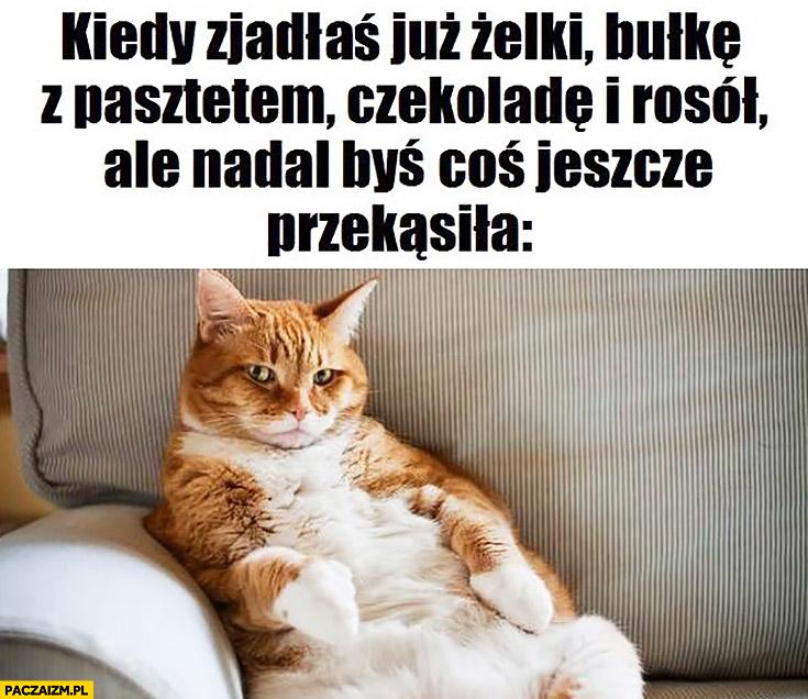 Gruby kot kiedy zjadłaś już żelki, bułkę z pasztetem, czekoladę i rosół ale nadal byś coś jeszcze przekąsiła