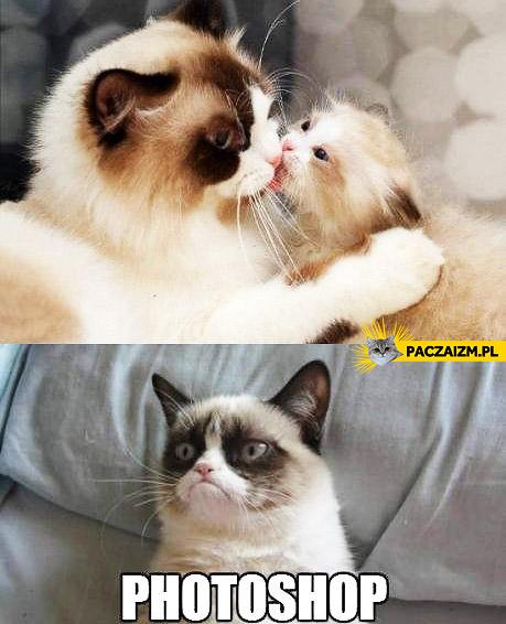 Grumpy cat photoshopped