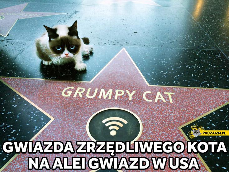 Gwiazda Grumpy Cat