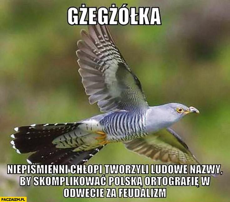 Gżegżółka niepiśmienni chłopi tworzyli ludowe nazwy by skomplikować polską ortografię w odwecie za feudalizm