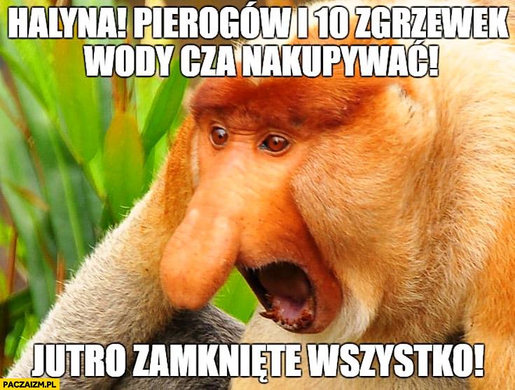 Halina pierogów i 10 zgrzewek wody trzeba kupić jutro zamknięte wszystko typowy Polak nosacz małpa