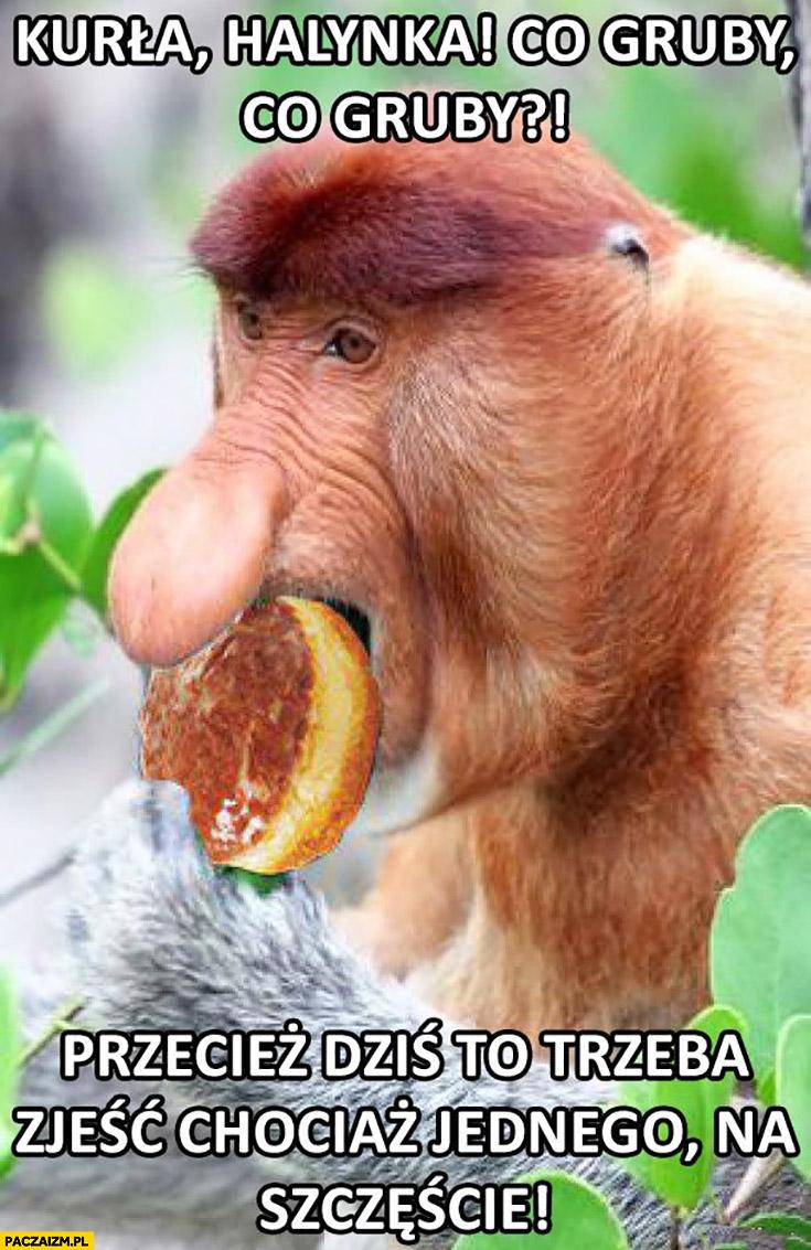 Halinka co gruby przecież dziś trzeba zjeść chociaż jednego pączka na szczęście typowy Polak nosacz małpa