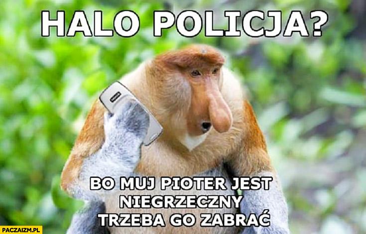 Halo policja mój Pioter jest niegrzeczny trzeba go zabrać dzwoni typowy Polak nosacz małpa