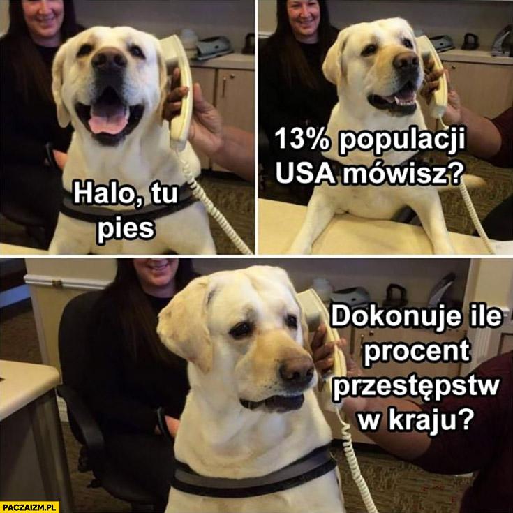 Halo tu pies, 13% procent populacji USA mówisz dokonuje ile procent przestępstw w kraju? Zdziwiony