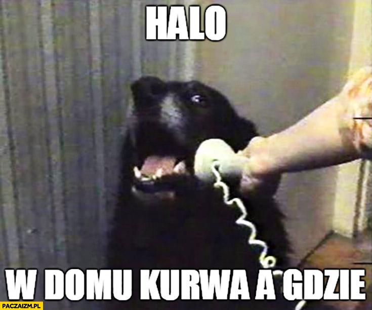 Halo? W domu kurna, a gdzie? Pies rozmawia przez telefon