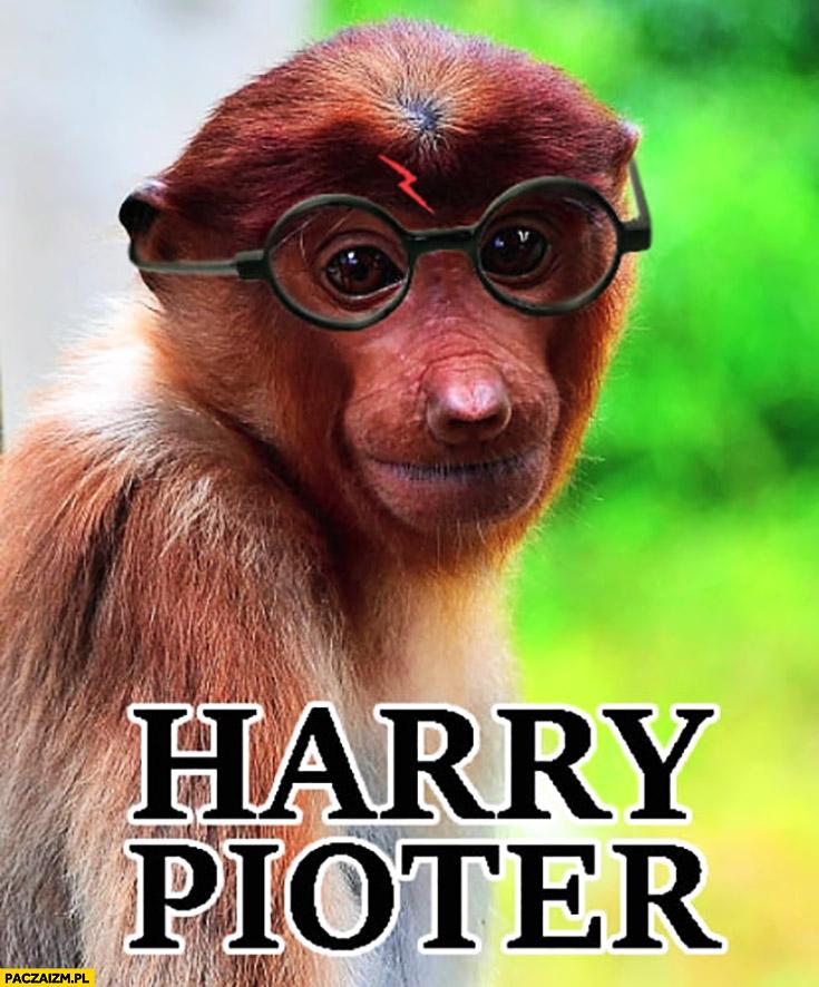 Harry Pioter Potter przeróbka typowy Polak nosacz małpa