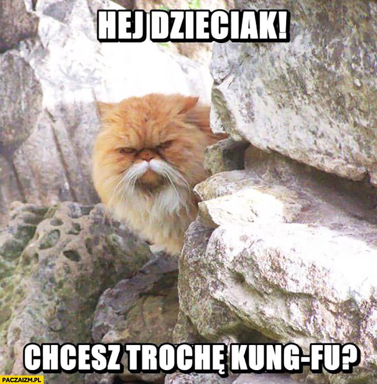 Hej dzieciak! Chcesz trochę kung-fu? kot z wąsami jak chiński mistrz