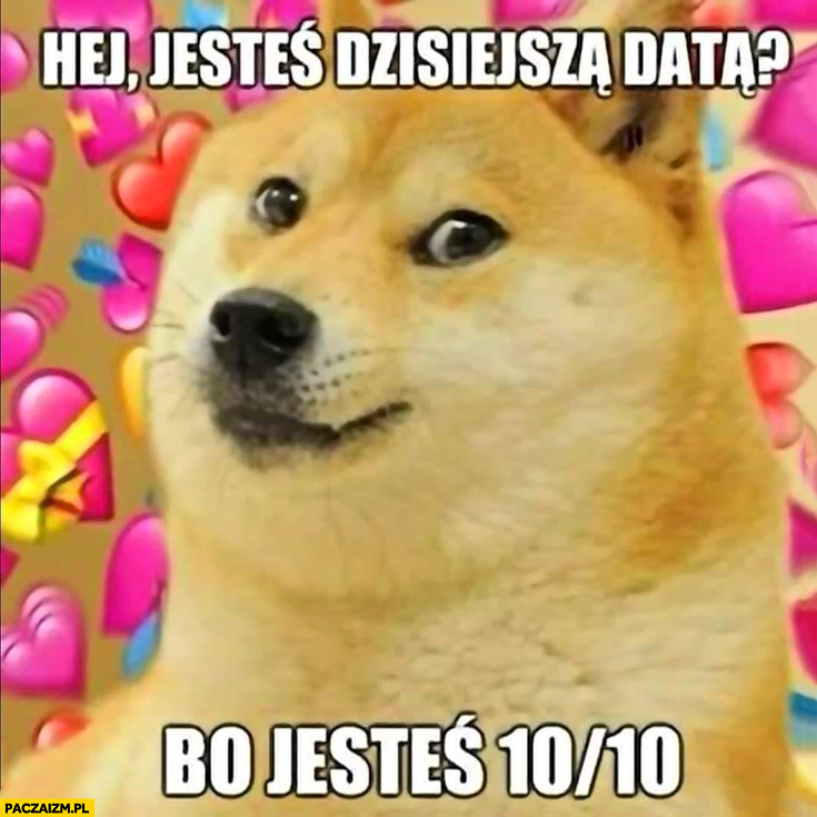 Hej jesteś dzisiejszą datą bo jesteś 10 na 10 pies pieseł doge