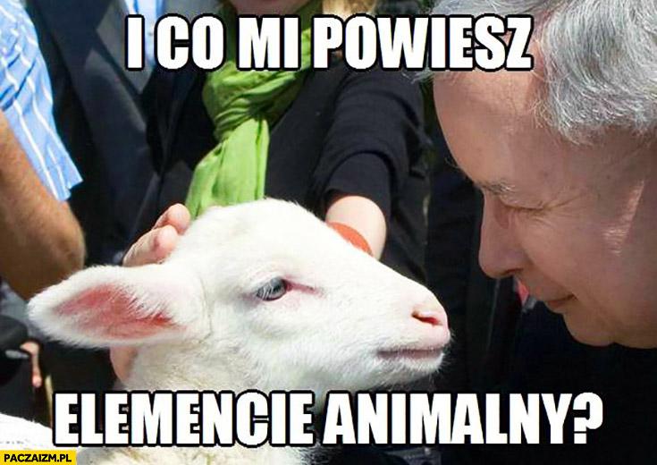 I co mi powiesz elemencie animalny? Kaczyński z kozą