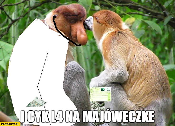 I cyk L4 na majóweczkę typowy polak nosacz małpa