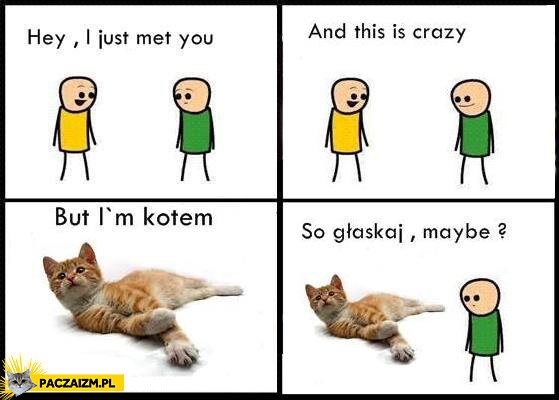 I just met you and this is crazy but I'm kotem so głaskaj maybe