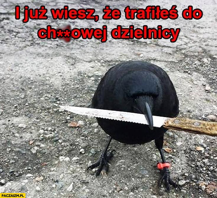 I już wiesz że trafiłeś do kijowej dzielnicy ptak z nożem kosa w dziobie
