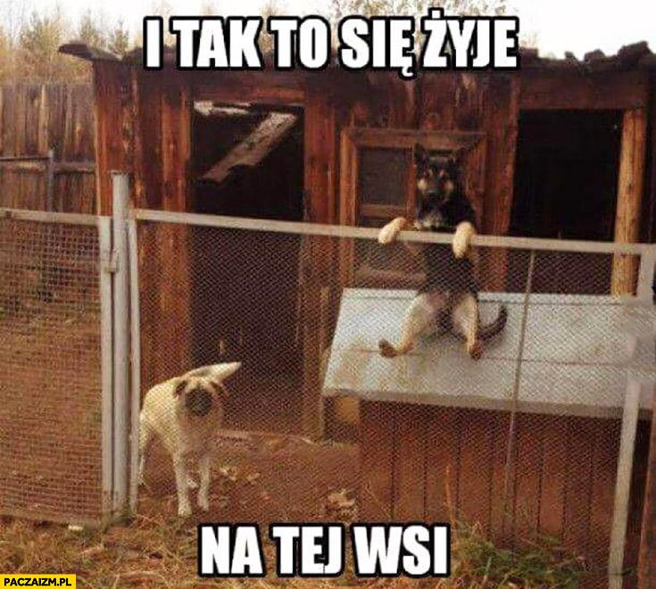 I tak to się żyje na tej wsi pies siedzi jak człowiek