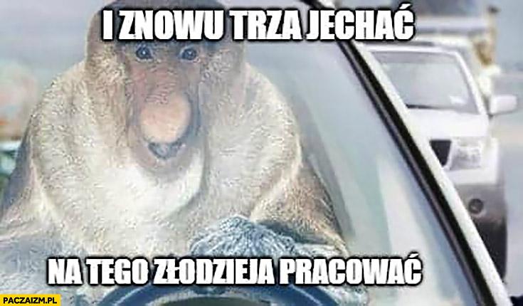 I znowu trza jechać na tego złodzieja pracować typowy Polak nosacz małpa