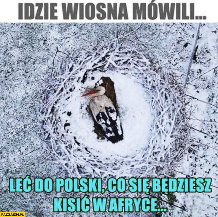 Idzie wiosna mówili leć do Polski co się będziesz kisić w Afryce bocian