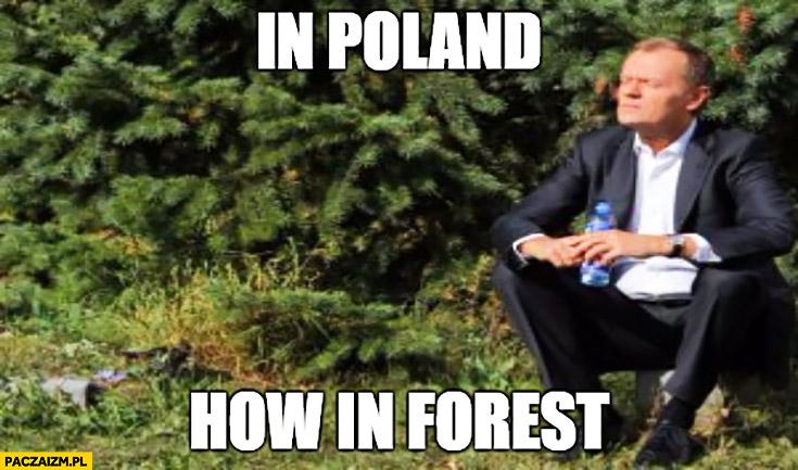 In Poland how in forest. Angielski z Tuskiem w Polsce jak w lesie