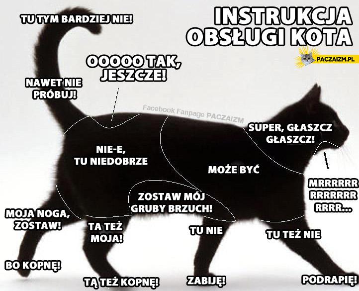 Instrukcja obsługi kota