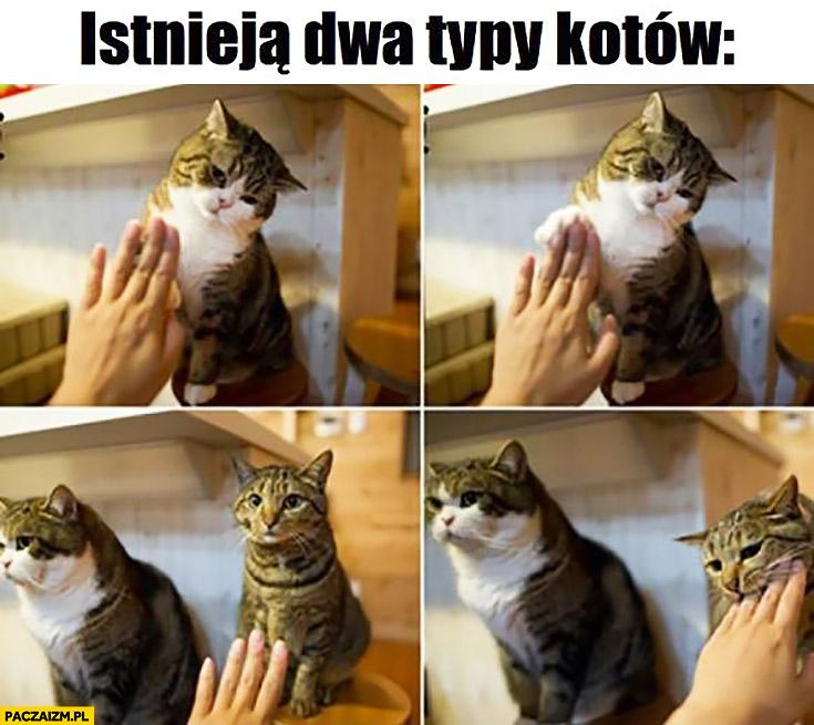 Istnieją dwa typy kotów: przybija piątkę, gryzie rękę