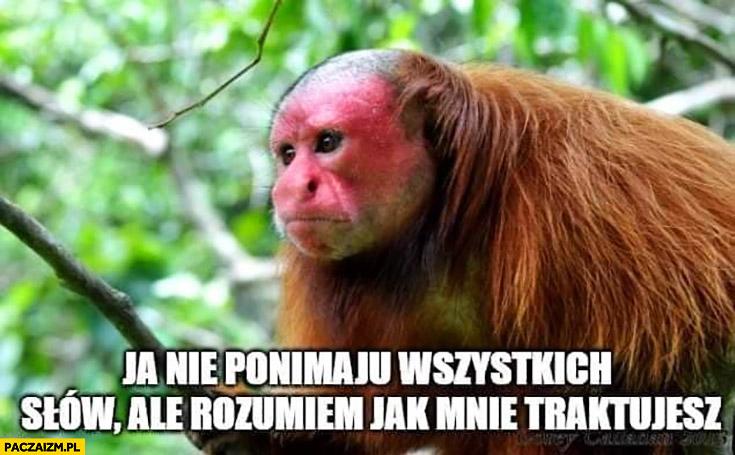 Ja nie panimaju wszystkich słów ale rozumiem jak mnie traktujesz typowa małpa Ukrainiec