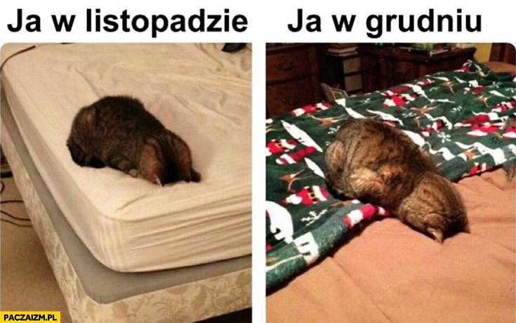 Ja w Listopadzie, ja w Grudniu. Kot na łóżku głową do poduszki