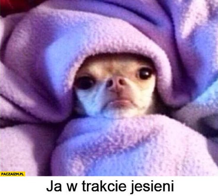 Ja w trakcie jesieni zły pies zawinięty w koc