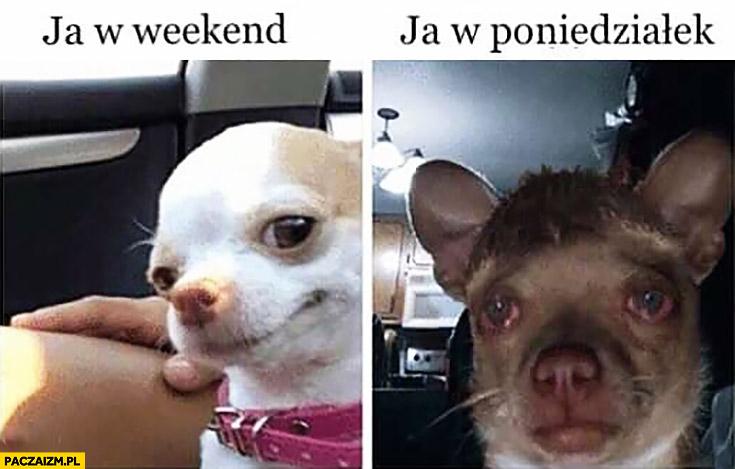 Ja w weekend vs ja w poniedziałek pies porównanie
