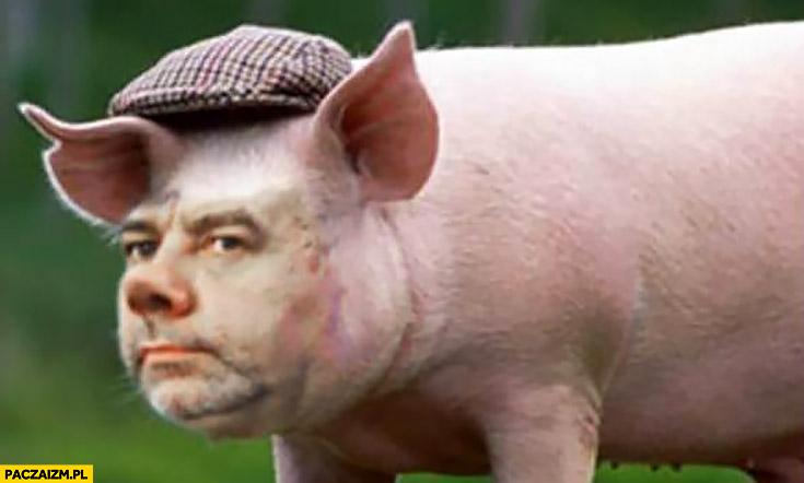 Jacek Sasin knur świnia prosię prosiak przeróbka