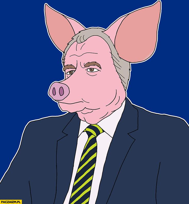 Jacek Sasin knur świnia przeróbka rysunek karykatura