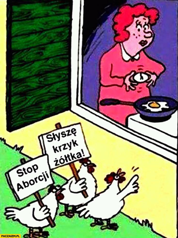 Jajecznica kury protestują stop aborcji słyszę krzyk żółtka