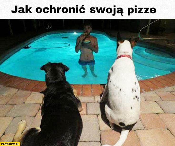 Jak chronić swoją pizzę przed psami jedzenie w basenie