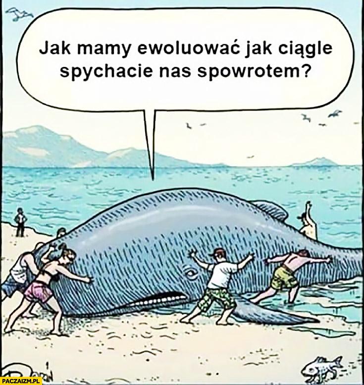 Jak ewoluować jak ciągle spychacie nas z powrotem? Wieloryb na brzegu