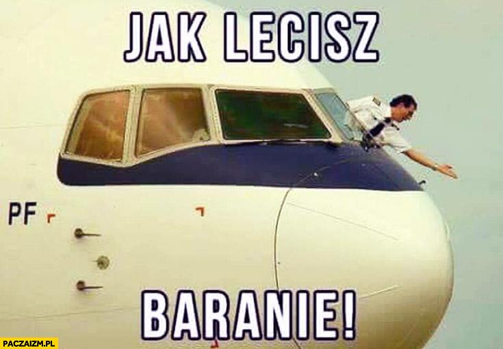 Jak lecisz baranie pilot samolotu