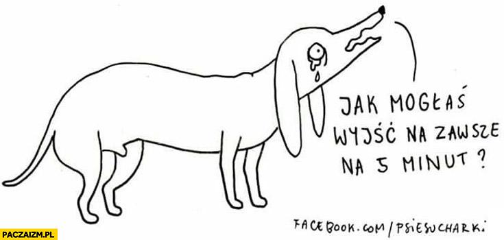 Jak mogłaś wyjść na zawsze na 5 minut? pies psie sucharki