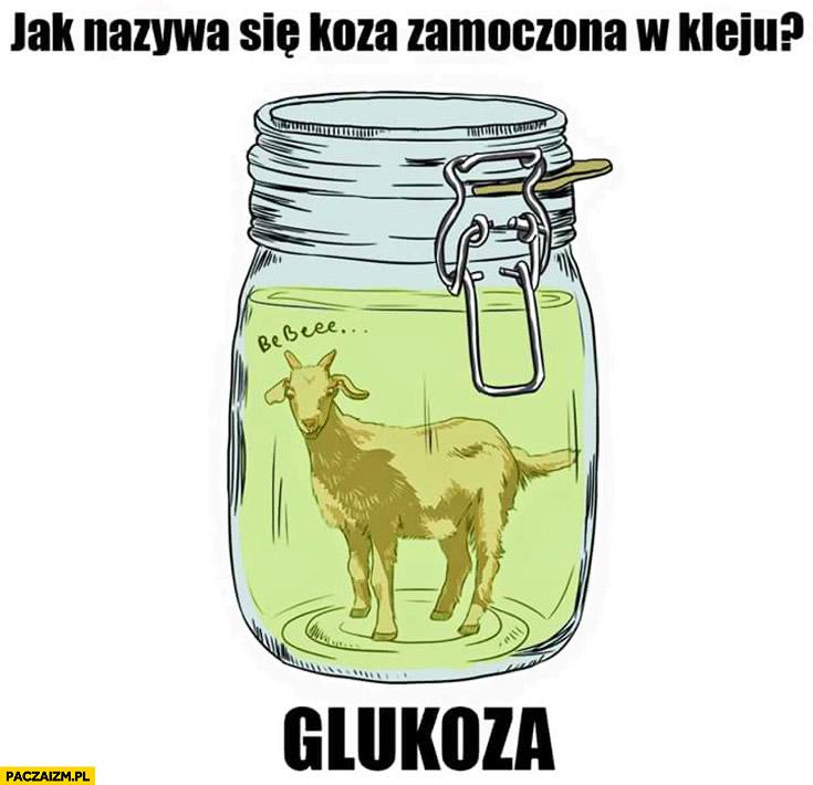 Jak się nazywa koza zamoczona w kleju? Glukoza